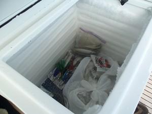 Bait Freezer