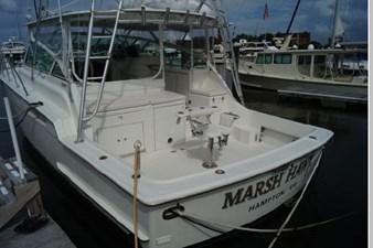Marsh Hawk 45 46