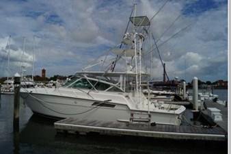 Marsh Hawk 92 93
