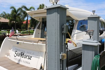 Sea Horse 8 IMG_7380