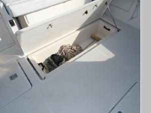 Fish Box with Mercerator