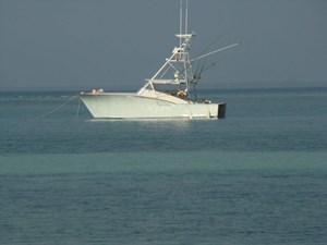 JESSIE LEE 15 39' 1994 Daytona Sportfish Express Cruiser JESSIE LEE