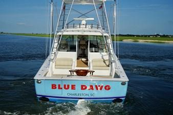 Blue Dawg 8